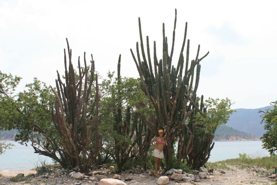 Big Cactus Bikini Cactus Growing Growth Nature Outdoors Plant Thorn Travelling Tree Vacation Venezuela Girl Young Women