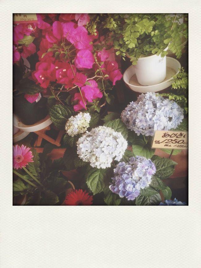 花びらが小さめの紫陽花。 First Eyeem Photo