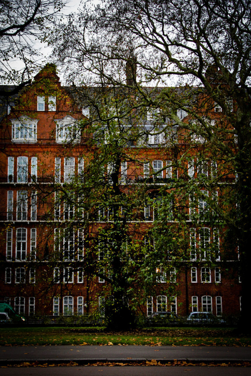 architecture, no people, building exterior, abandoned, tree, built structure, outdoors, city, day