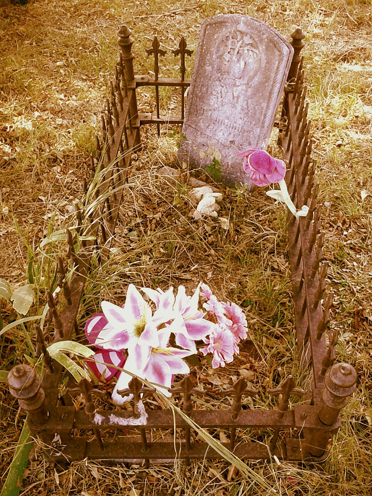Fragility Petal Outdoors Tranquil Scene Atmospheric Mood Cemetary Beauty Cemetery_shotscemetery Softness Flower Cemetery Photography Old Headstone Graveyard Cemeteryscapeheadstone Grave Gravestone grave GravelGrave Stone Gravegraves Grave