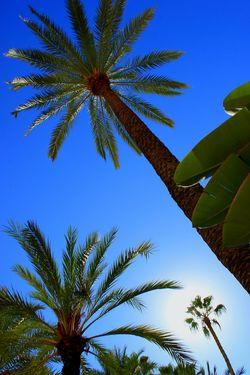 Valencia, Spain Trees Palm Trees Sky No People Clear Sky
