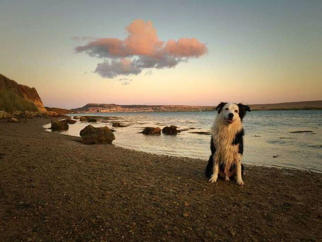 Natural Beauty Dogslife Collie Dog Beach Walk Weymouth Dorset