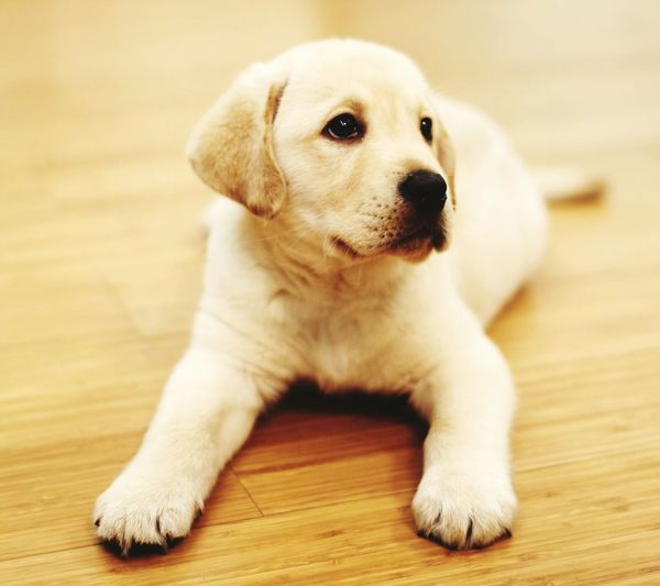My sweet doge....hhmmaaa First Eyeem Photo