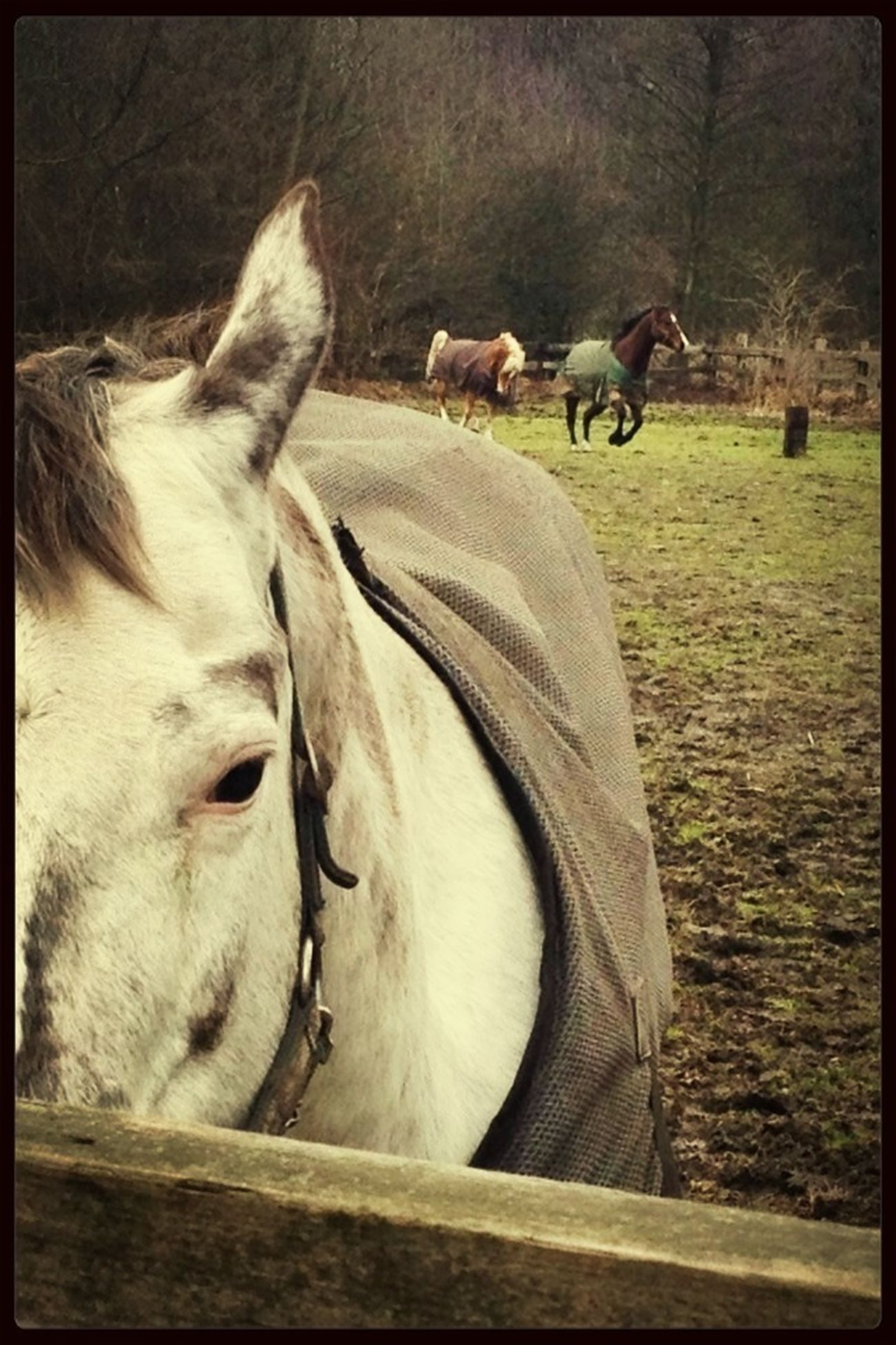 nature calm and beautiful horses Hanging Out Galopp EyeEm Nature Lover Keep Calm