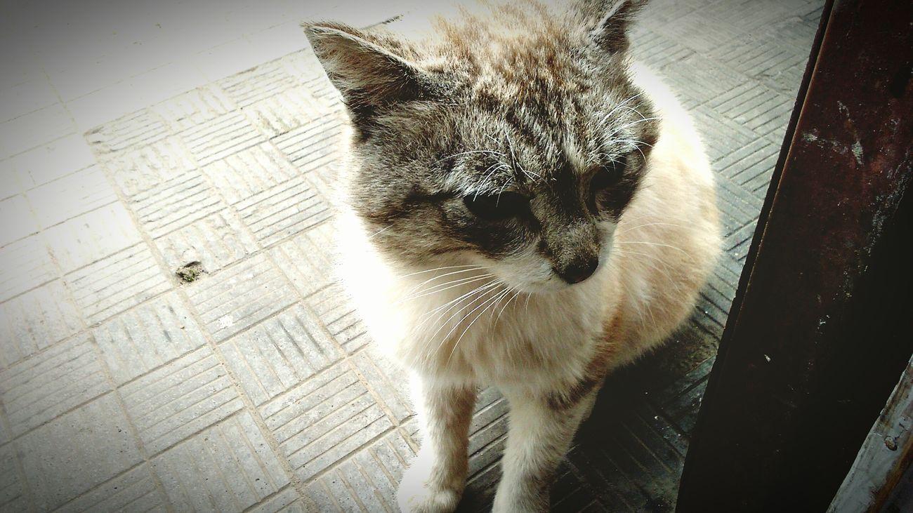 Всетажекотейка Cat