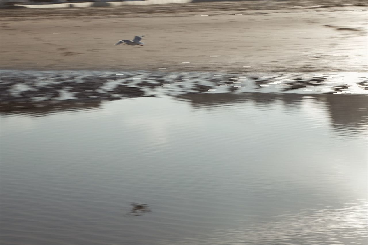 Abstract Bird Flying Moving Reflection Sand Sea Seabirds Water