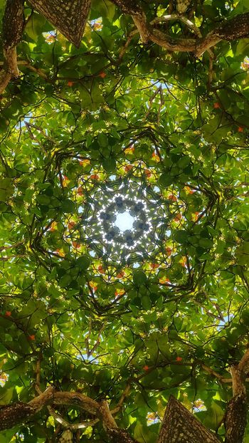 Green Color Tree Nature Outdoors Beauty In Nature Close-up Full Frame EyeEm Gallery EyeEm Selects EyeEm Best Shots - Nature Green Color Costa Rica Tranquility EyeEm Beauty In Nature Nature_collection Nature Mandala Relax!  Mandala Art Kaleidoscope