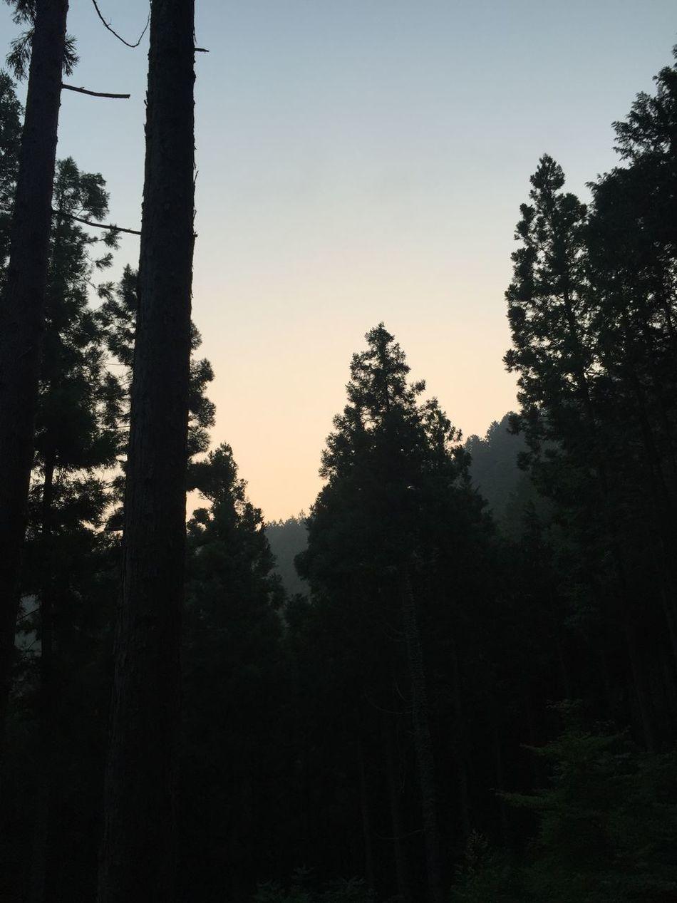 Good morning Okutama. Okutama Forest Forest Path Japan Morning Good Morning Woods
