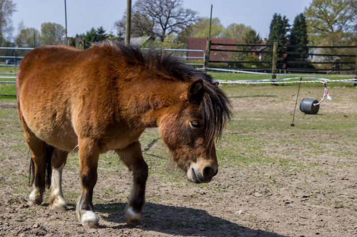 Animal Themes Braun Brown Domestic Animals Horse Horses No People One Animal Outdoors Pferd Pony Standing Taking Photos Tiere