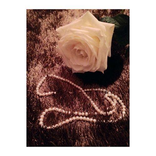 L'espace d'une vie est le même. Qu'on le passe en chantant ou en pleurant. First Eyeem Photo Flower White Romance