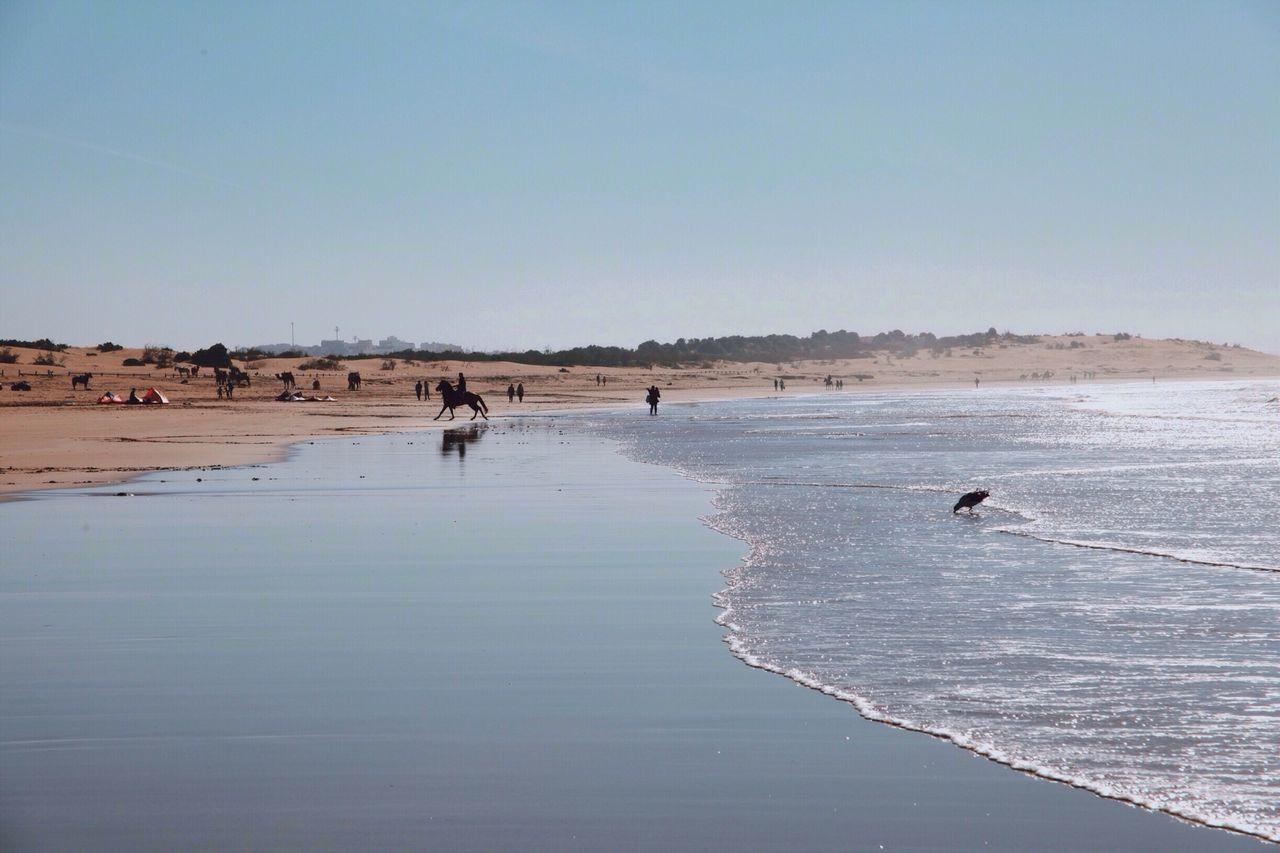 Marrakech Morroco Open Edit Beach Horse Africa Sun Animals Life Travel Sunlight Warm Sunny Tourism Ocean Animal Wild Paradise Horses