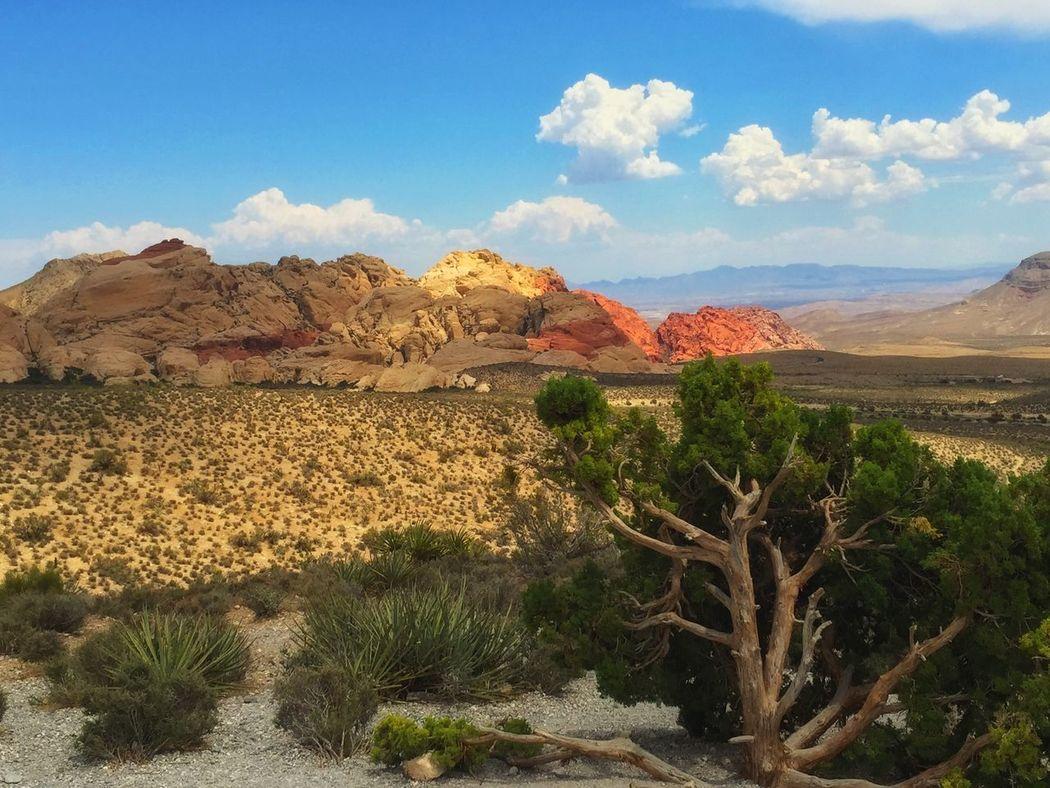 Hiking at Red Rock Canyon. Hikingadventures Desert Beauty Desert Life Nature Las Vegas Nevada Nice Views Photo Contest Best IPhone Photos IPhoneography