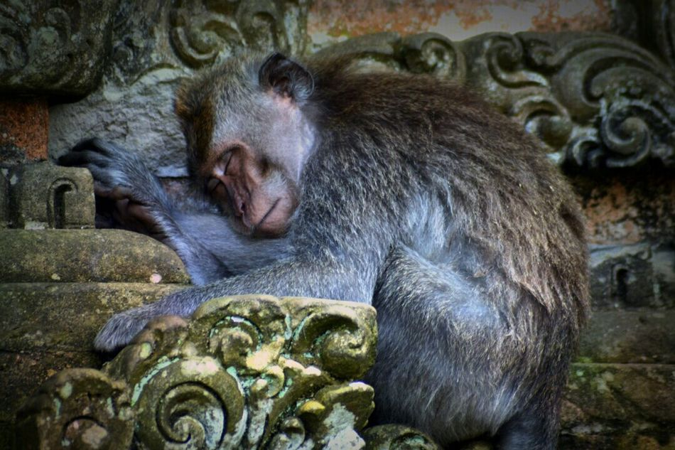 Beautiful stock photos of monkey, Animal Themes, Animals In The Wild, Day, Design