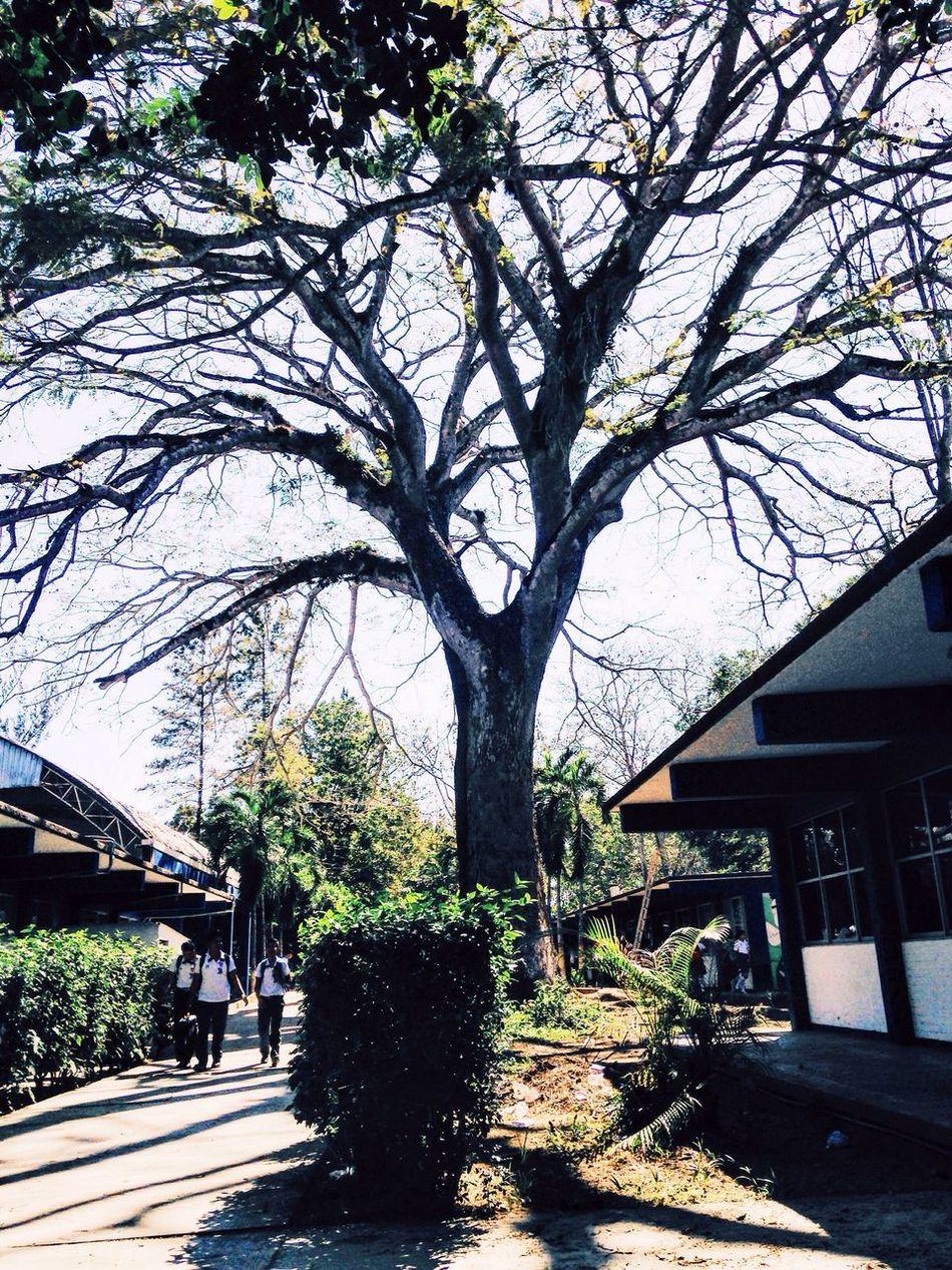 Cbtis48 Oldtree Trees Tree