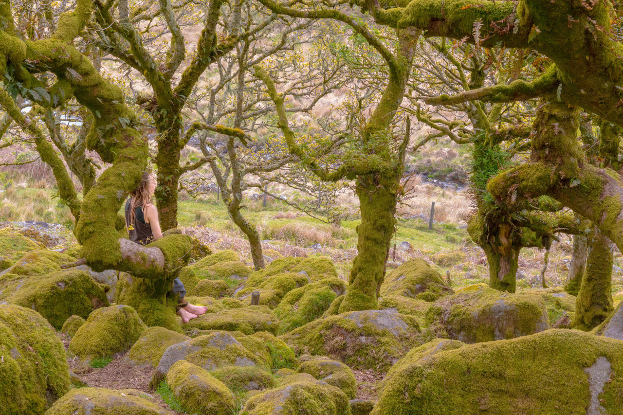 Wistman's wood, trees and granite rock covered with moss, old ancient forest of Dartmoor Ancient Forest Beauty In Nature EyEmNewHere Forest Girl Mossy Outdoors Sacred Places Wistmans Wood Devon