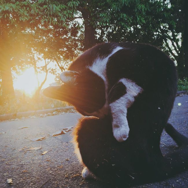 Cat IPhoneography Streetphotography Relaxing Animal Sunset Light And Shadow