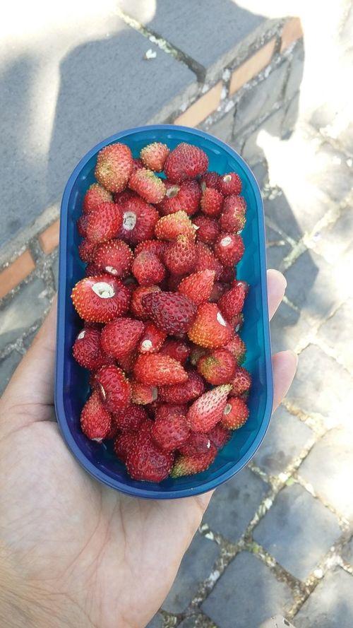 Ggggggnnnnnaaaaammmmyyy Fruit Freshness Food Red Strawberry Fragolinedibosco Gnammy Nemi Fragoline Specialità Di Nemi Live For The Story