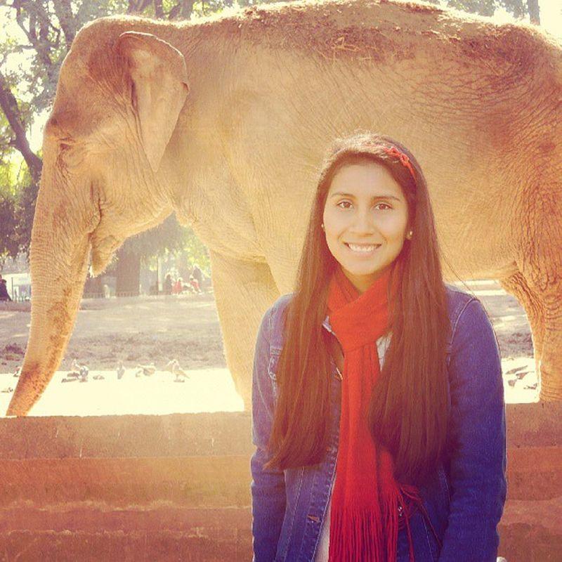 Zoológico Today Conelpeke Viejito elefante buenosaires me picoftheday