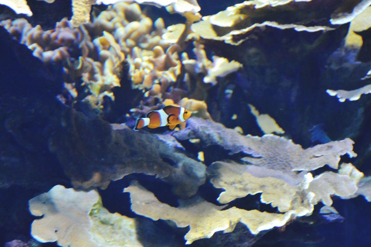 Nemo Fish Nature Water Animal Themes Aquarium No People Multi Colored Animals In Captivity Tropical Fish Animal Aquarium Photography Oceanographic