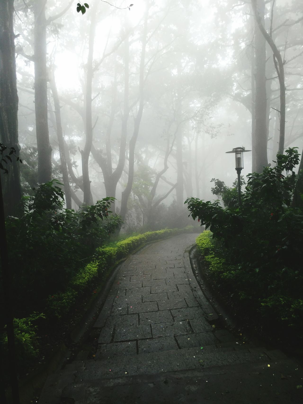 Fog Foggy Road Tree Weather Beauty In Nature Nature