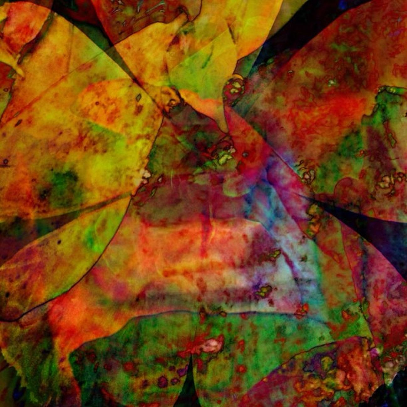 The Colors of Joy & Gratitude (3 of 3) Dedicated to all those who follow and shower me with loving sentiments. You make my days brighter Ig_captures Happycolortrip Abstracto Coloronroids All_shots Dhexpose StayABSTRACT Ace_ Abstractart Deadlydivas Gang_family Ig_one Editjunky Icatching Mobileartistry Femme_elite Instauno Weareinheaven Igsg You_nique_edits Bd Mi55flowerz Abstracters_anonymous Edit_fever Abstract_buff Abstractobsession Instaabstract