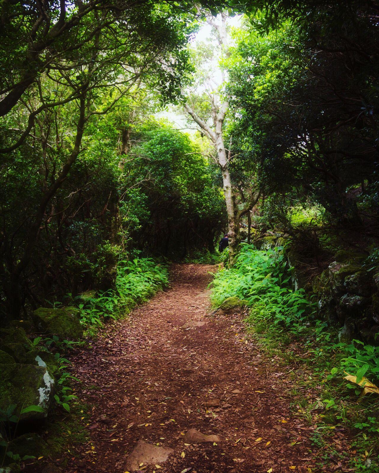 Nature São Jorge Azores Canon
