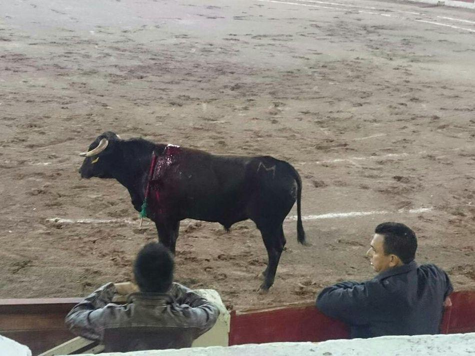 Novillada Durango, Durango En Los Toros Aficion Defensa De Los Toros Oro, Seda, Sangre Y Sol Toros