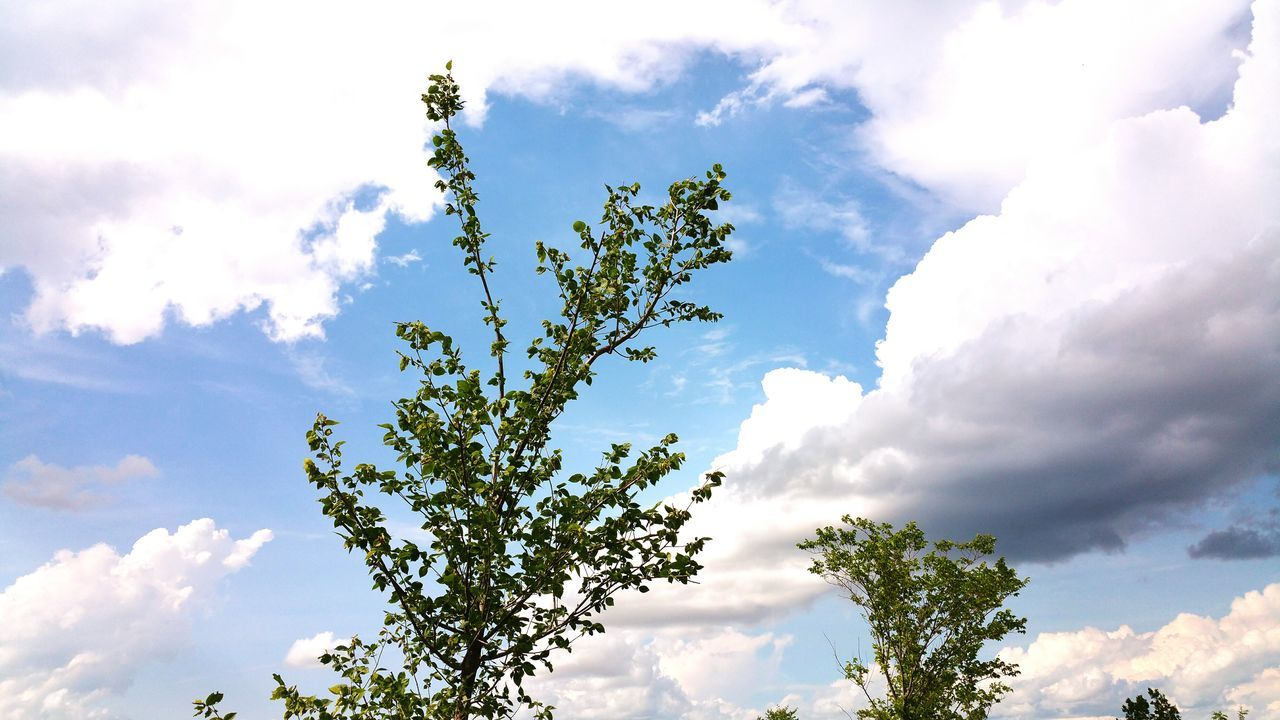 Afternoon Cloudy Skies Patches Of Clouds Patches Of Sunlight Tree And Sky Trees And Sky