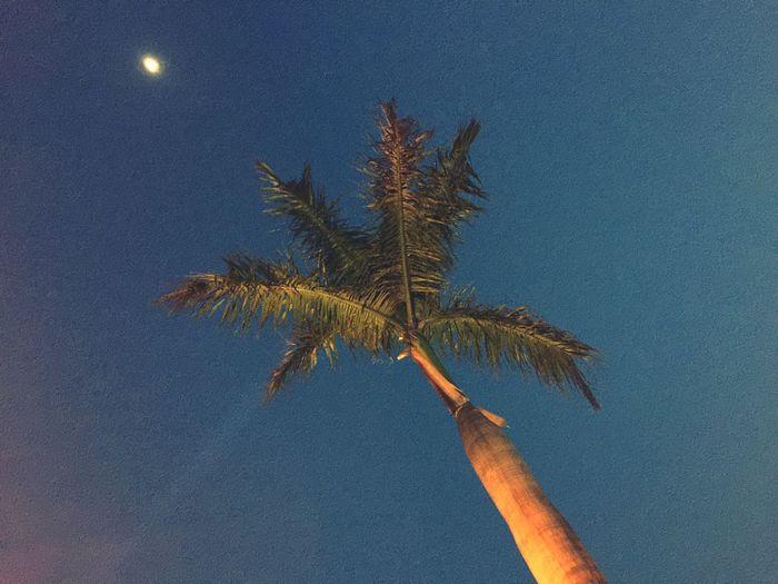 Moon and tree at night.