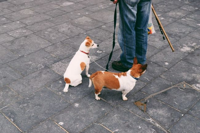 Pets Dog Domestic Animals Mammal Pet Leash Standing Pet Owner Street Person Outdoors People People Watching Footpath Exploring Animals EyeEm Gallery Eye4photography  Taking Photos Outdoor Photography