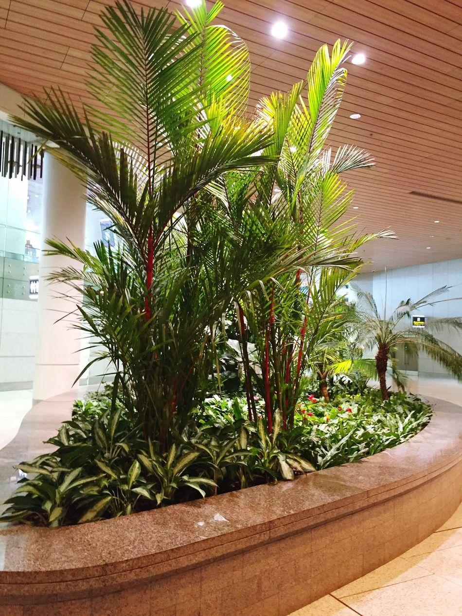 Green Plants Garden Interior Views Green Color Green Green Green!  Indoor Gardening
