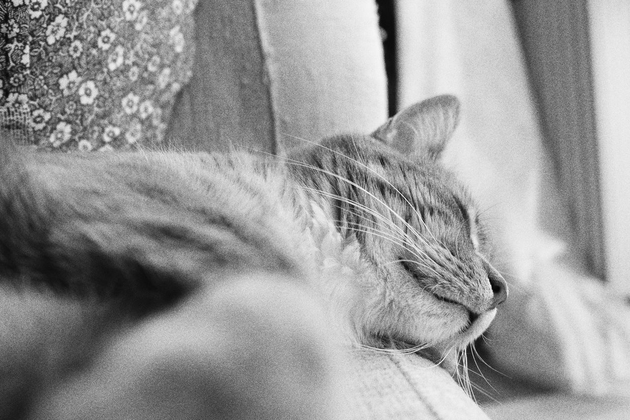 Domestic Cat Pets One Animal Animal Themes Feline Domestic Animals Mammal Whisker Cat Indoors  Lying Down Close-up Relaxation Day No People Full Frame Kitten Monochrome Tranquil Scene Adorable Cat  Cute Portrait Resting Comfortable Softness
