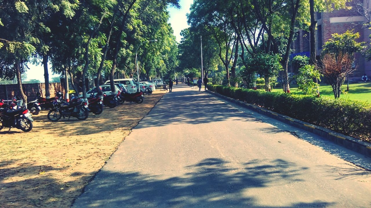 College Life Diaries College Paths Road