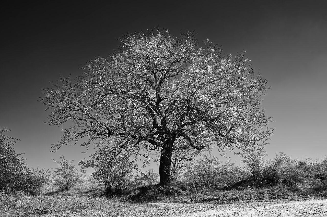 Tree Growing On Field