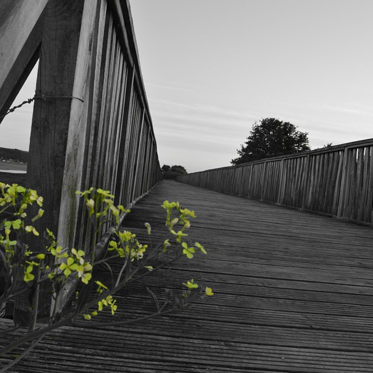 plant, growth, flower, nature, outdoors, built structure, no people, day, architecture, sky