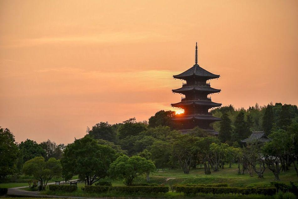 Okayama EyeEm Japan EyeEm Best Edits Landscape EyeEm Best Shots Evening View Season Of Fresh Green Taking Photos Nature Temple Sunset 備中国分寺 五重塔 Five-storied Pagoda