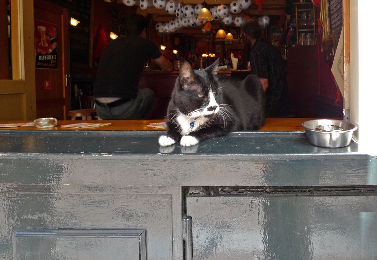 Your Amsterdam Hanging Out Relaxing Enjoying Life Soccer Checking The Game Friends l Lazy Lazy Afternoon Black Cat Lazy Cat Watching Catguard Bar Drinking EyeEm X Google - Your Amsterdam