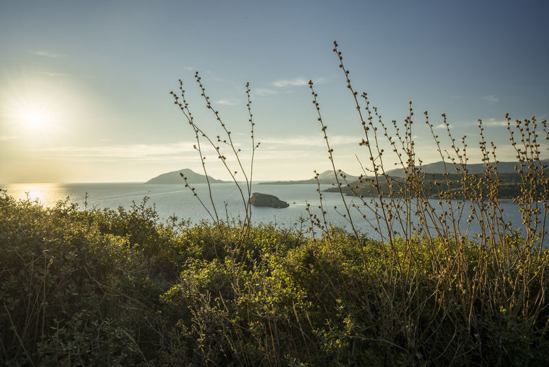 Grasses in front of tranquil mediterranean scene with beginning sunset Cape Sounion Greek Islands Mediterranean  Attica Beauty In Nature Day Grass Greece Growth Horizon Over Water Idyllic Nature No People Outdoors Plant Scenics Sea Sky Sounio Sunset Tranquil Scene Tranquility Water