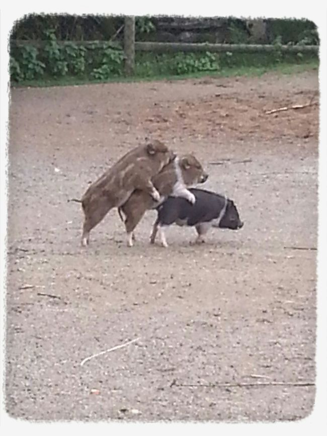 This picture a caption at Borås djurpark :-)