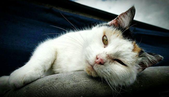 Cat Cats Cat♡ Cat Lovers Lazy Sunday Lazy Lazy Day Lazysunday Lazy Cat Lazy Afternoon Stretch Stretching