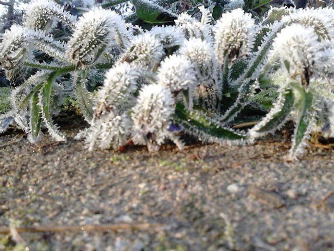 Eingeeiste Welt Naturpur Nofilter Taken From Smartphone Camera