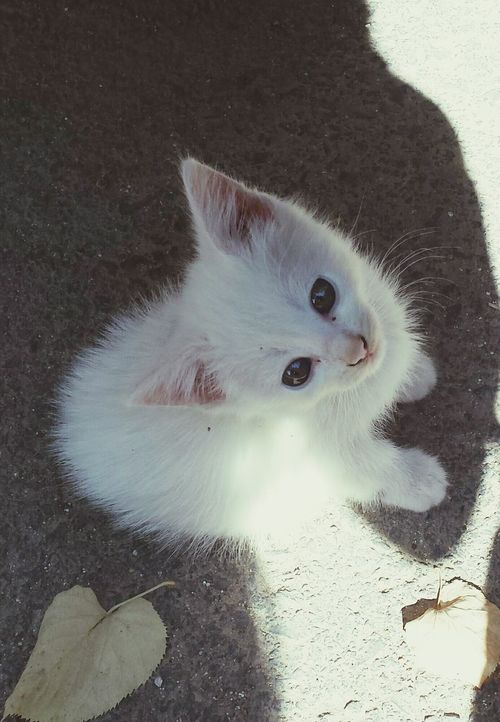 look what i found Cat Amazing Eyes White Pure