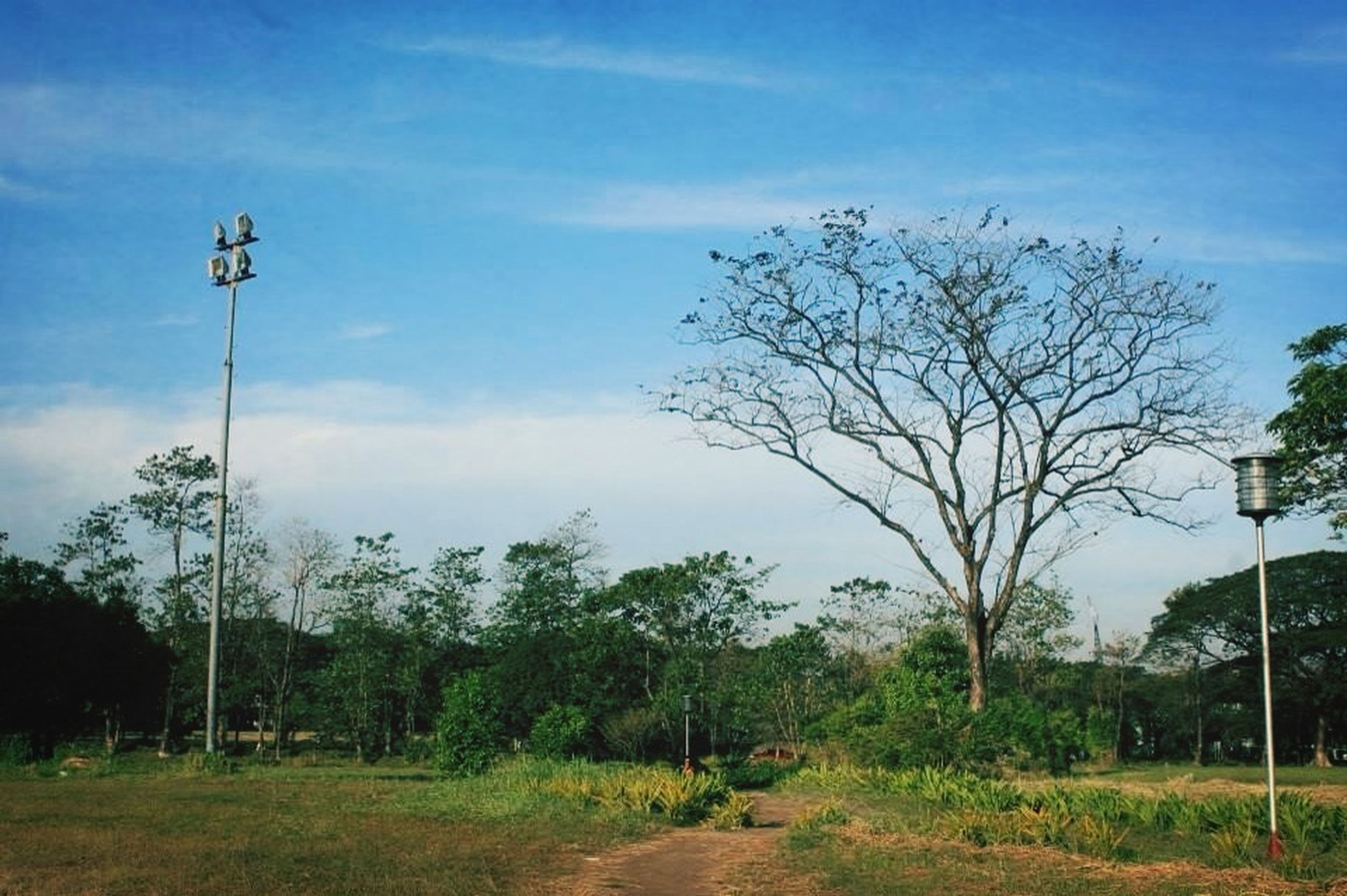 tree, sky, tranquility, tranquil scene, grass, street light, the way forward, nature, bare tree, cloud - sky, scenics, beauty in nature, landscape, growth, branch, cloud, road, field, blue, green color