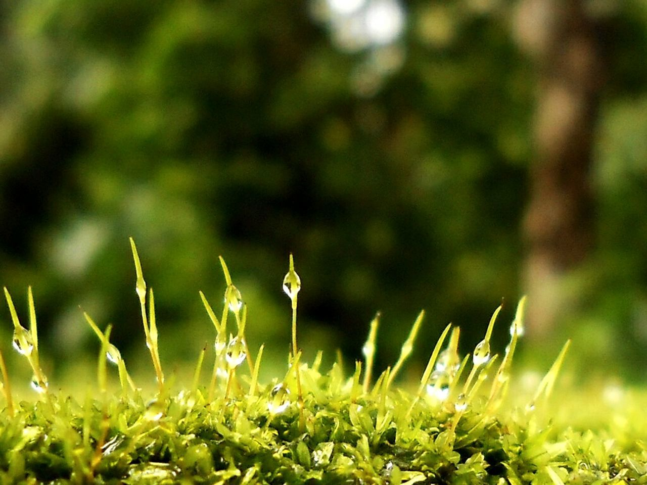 growth, nature, plant, beauty in nature, grass, no people, outdoors, green color, flower, day, freshness, close-up, fragility