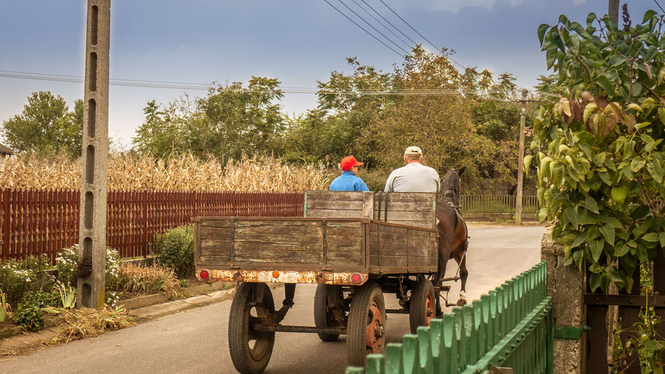 Countryside Horse-drawn Carriage Journey Mode Of Transport Outdoors Rear View Riding Road Rural Scene Sky Togetherness Transportation