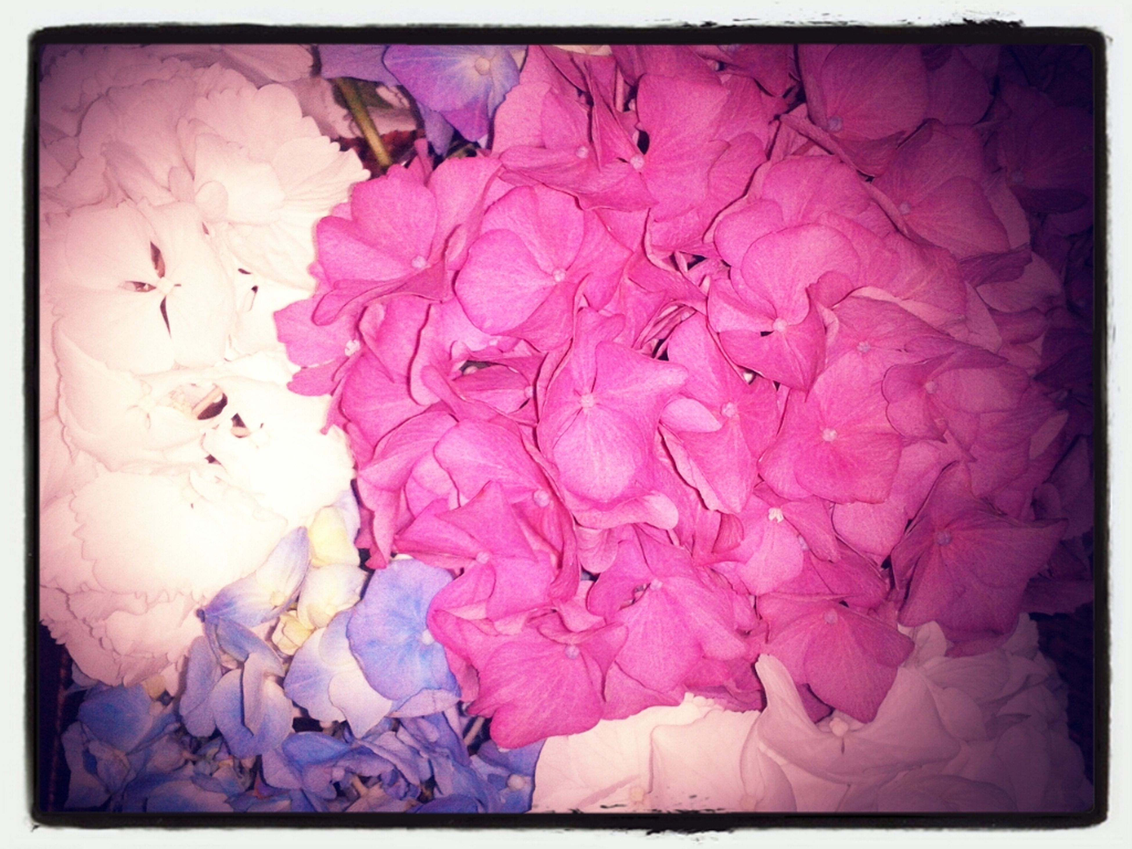 transfer print, auto post production filter, flower, indoors, pink color, fragility, close-up, petal, wall - building feature, high angle view, no people, full frame, multi colored, purple, pink, frame, nature, backgrounds, paper, floral pattern