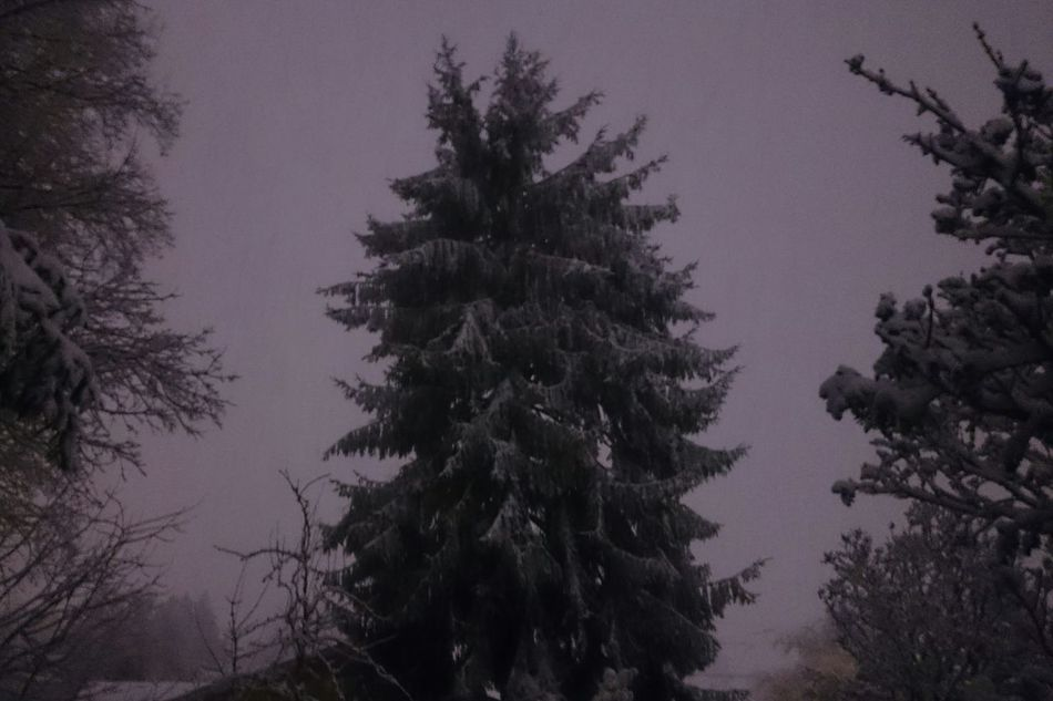 No Filter Snow Evergreen Portland North Portland Spooky Horror Photography Dark Nature No People Looking Out My Back Door