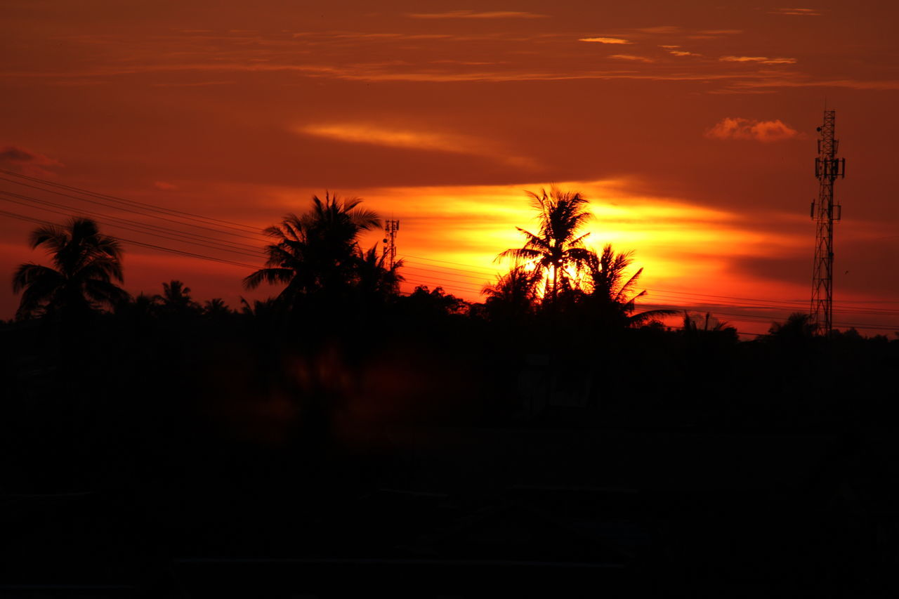 sunset... Sunset Nature Tree Silhouette Beauty In Nature Tranquility Scenics Sun Sky No People Growth Palm Tree Outdoors Landscape