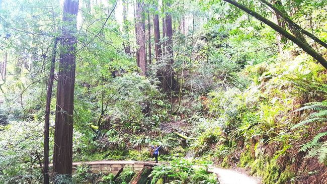 Travel Traveling Adventures Hiking Nature Photography Nature Plus Size Beauty  Let Your Hair Down California Redwood Trees Redwood Forest Redwood Muir Woods San Francisco Beauty Travel Photography
