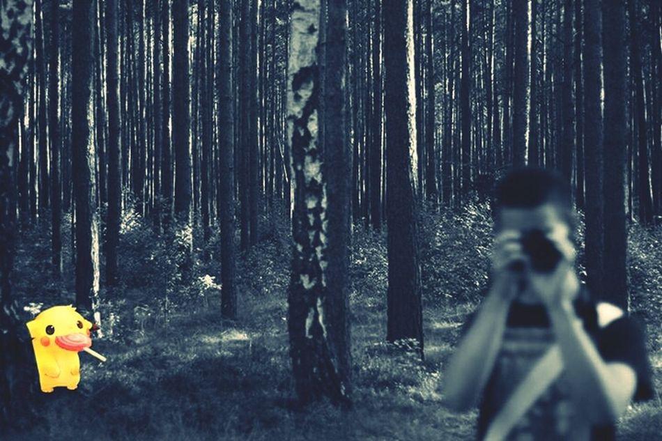 Photoshop? I think not . Forest, Wild Pikachu, Canon, Brandenburg Germany